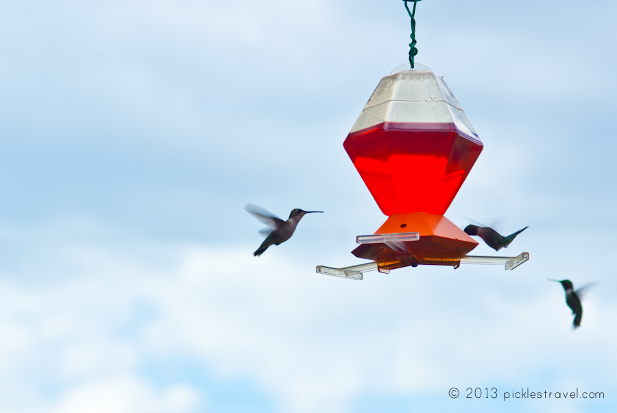 Hummingbird food going to the birds hummingbirds feeding this hummingbird food recipe is a quick forumfinder Image collections