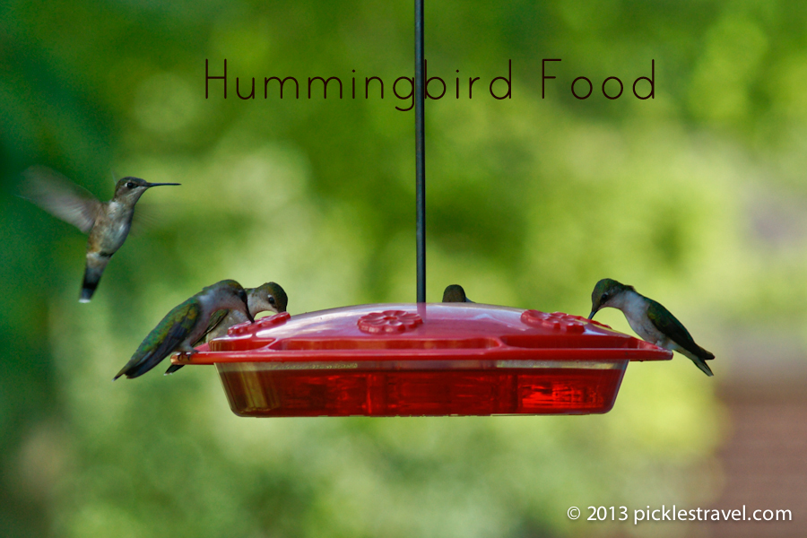 Hummingbird food going to the birds hummingbird food recipe forumfinder Image collections