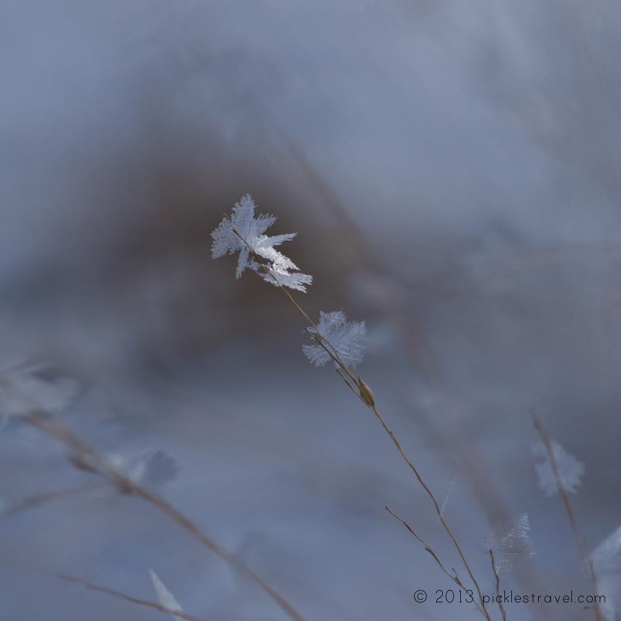 Macro Frost Shot
