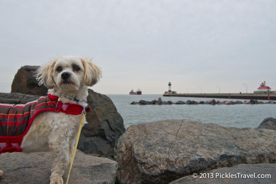Dog travel to duluth