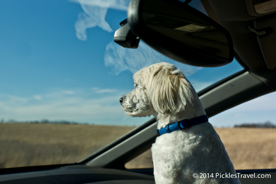 All eyes on the road when road tripping with your dog