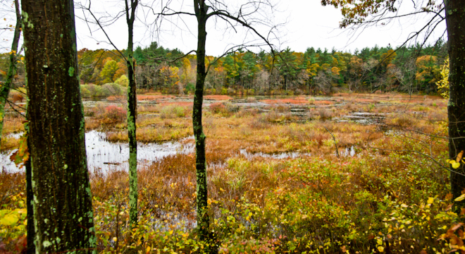 Ocean Spray Cranberry Bog in the fall