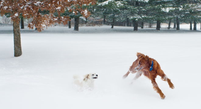 Joyful pups in the first fresh snow of the season