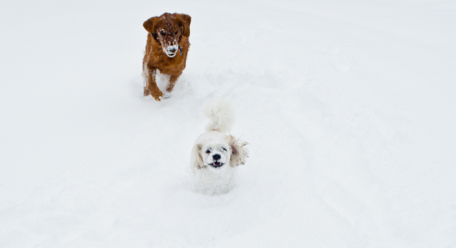 Snowball fun with dogs one and two