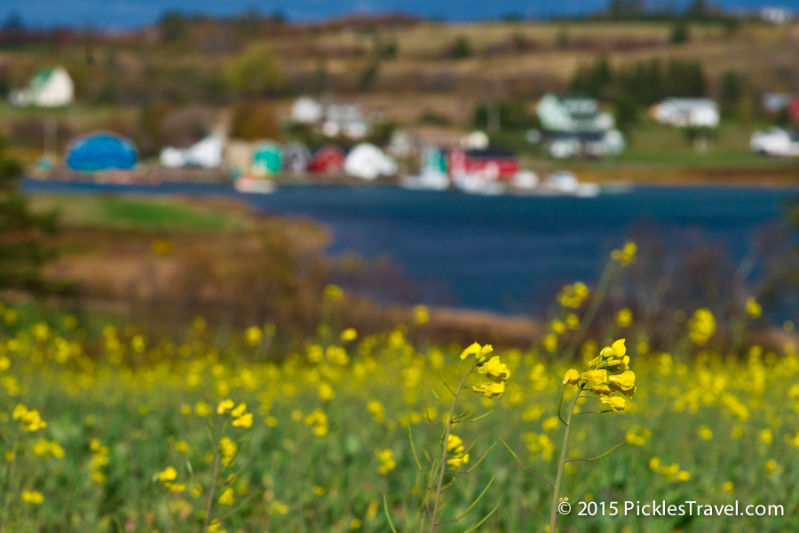 Flowers at French River Viewscape