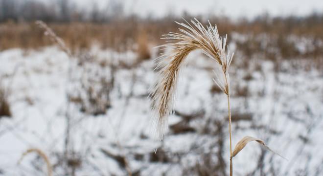 frost bitten prairie in the dead of winter