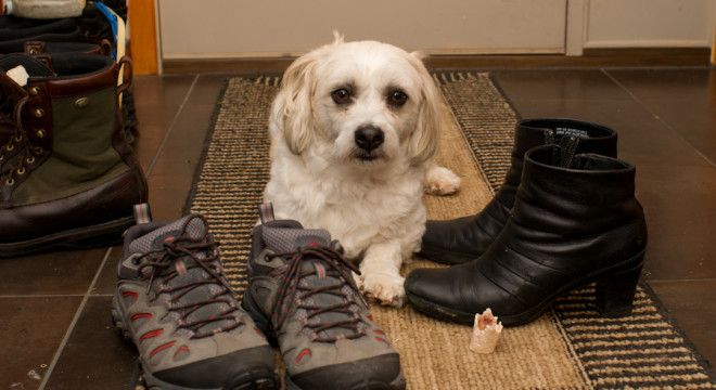 Shoes and Puppy