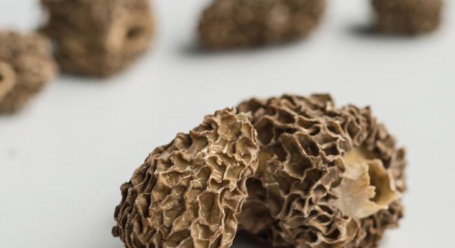 Dehydrated Morel Mushroom Recipe