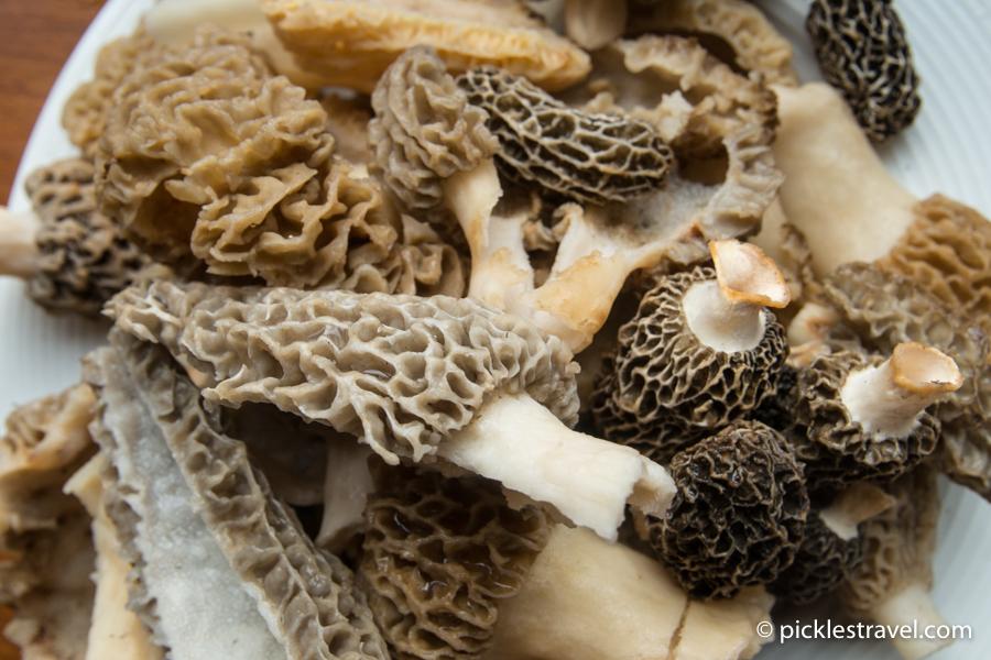Pile of Morel Mushrooms