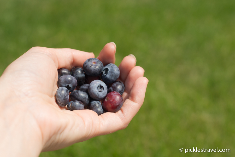 Grab a Handful of Blueberries for a Snack