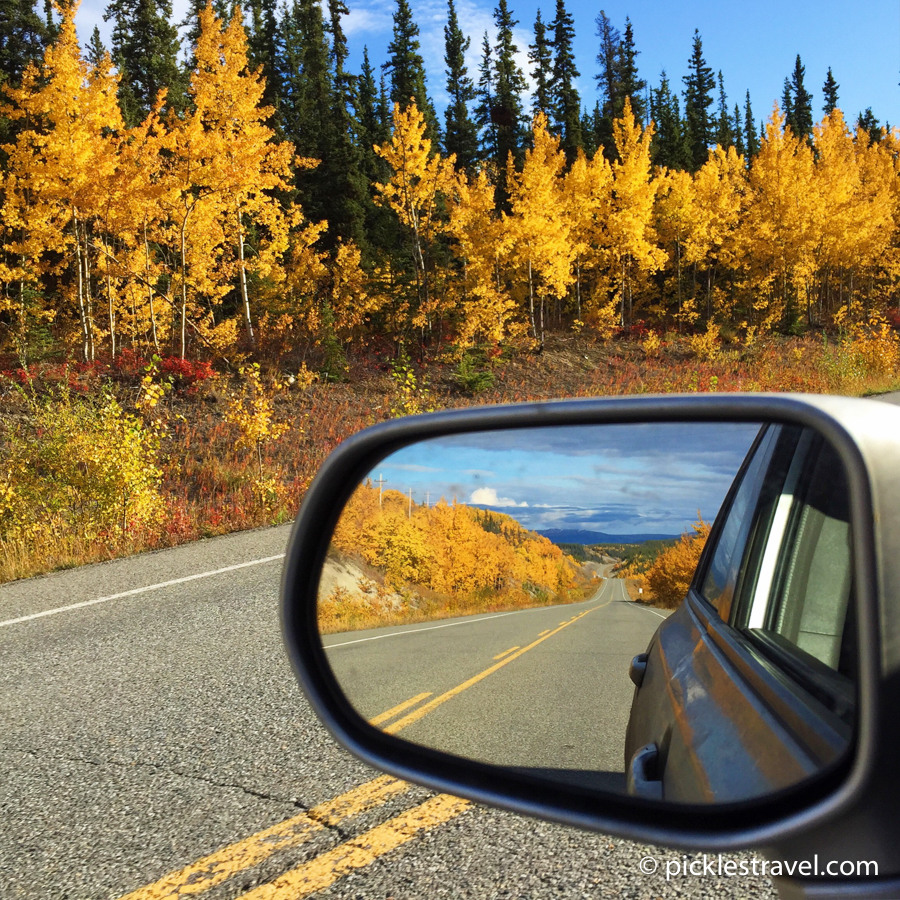 Golden trees on a fall road trip