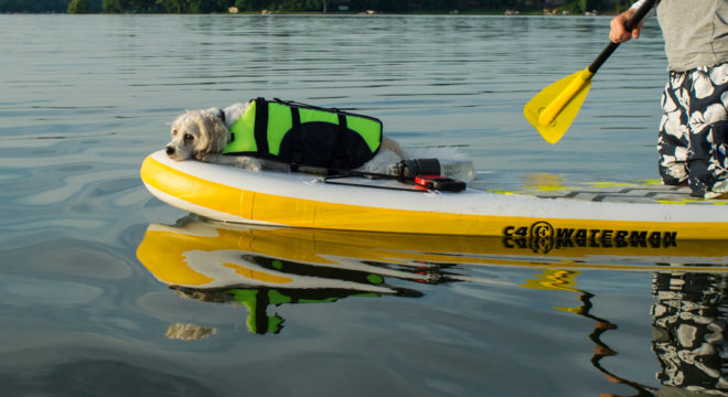 Sleepy Puppy on C4 Waterman inflatable SUP