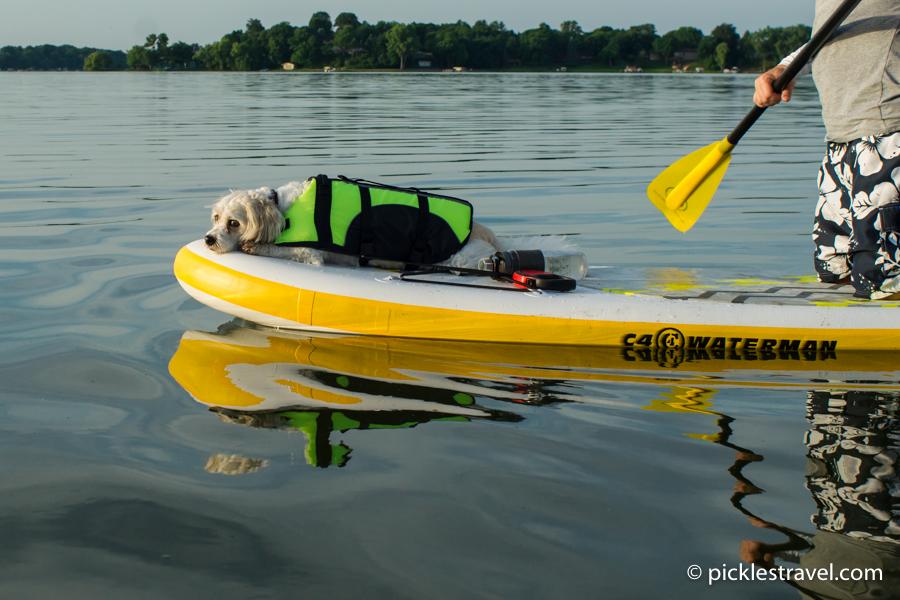 Sleepy Puppy on C4 Waterman inflatable SUP