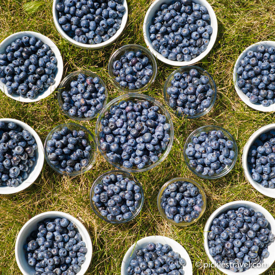 50 blueberry recipes worth eating