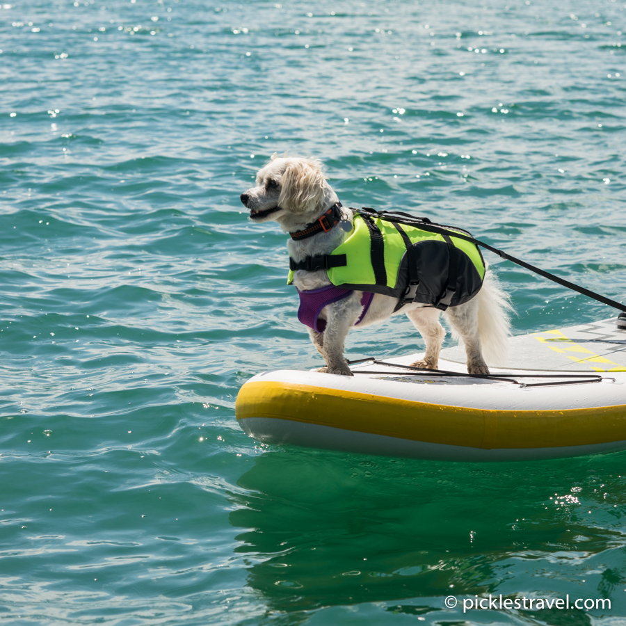 Dog at the helm of the SUP paddle board