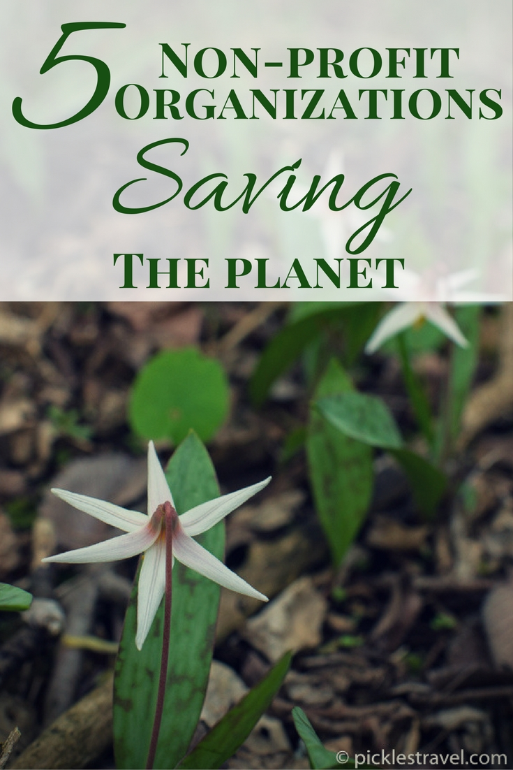 Best non profit organizations and websites for volunteering and donating ideas when it comes to ways to help save the planet and its natural resources