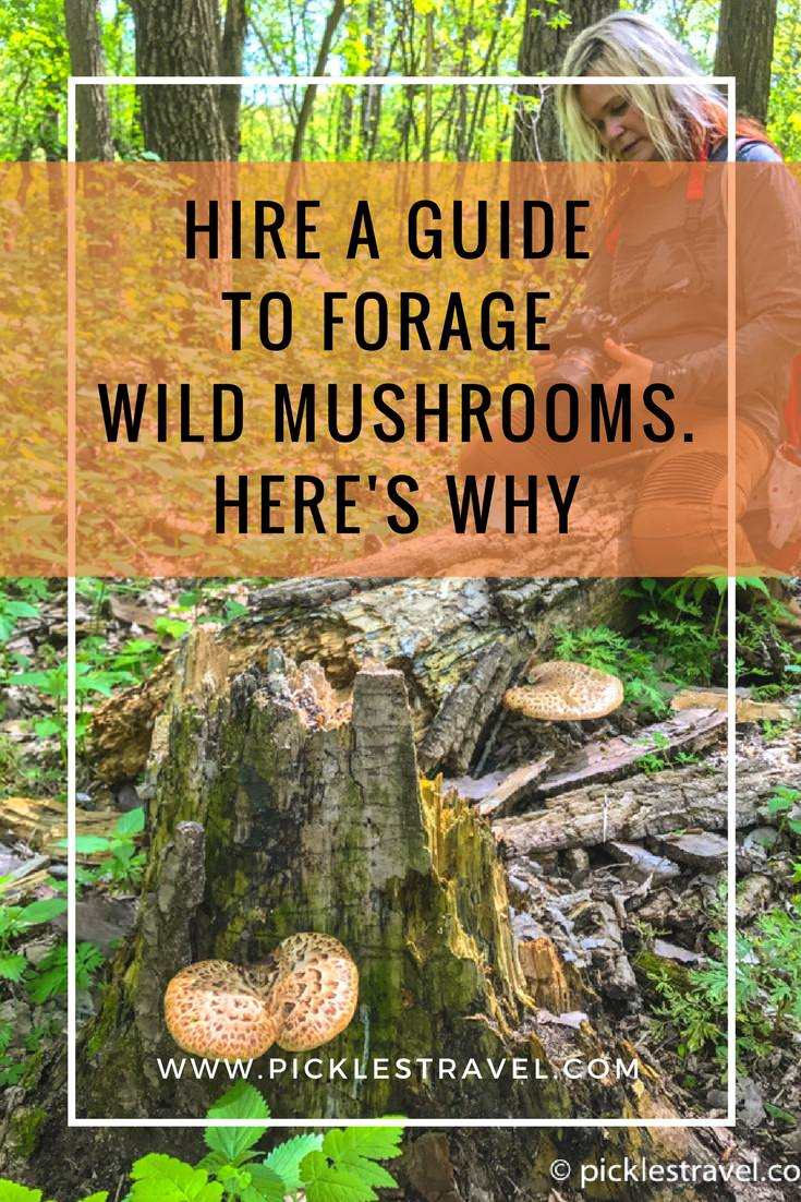 Foraging for morel mushrooms or pheasant backs or any wild edible is a wonderful outdoor adventure but always a good idea to have professional guidance when hunting. Here's why you need to hire a guide for your next time outside.