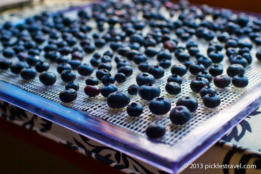 Creating A Blueberry Raisin Dehydrator Preserving