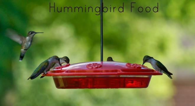 hummingbird food recipe