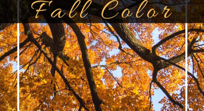 Best spots to catch Fall colors in Mankato Minnesota, whether on a road trip drive by or for the perfect family photo backdrop these locations have all the beauty and color you expect from the season