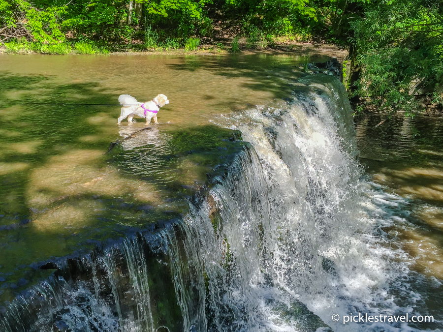 dog friendly minnesota state parks at Nerstrand Big Woods State Park