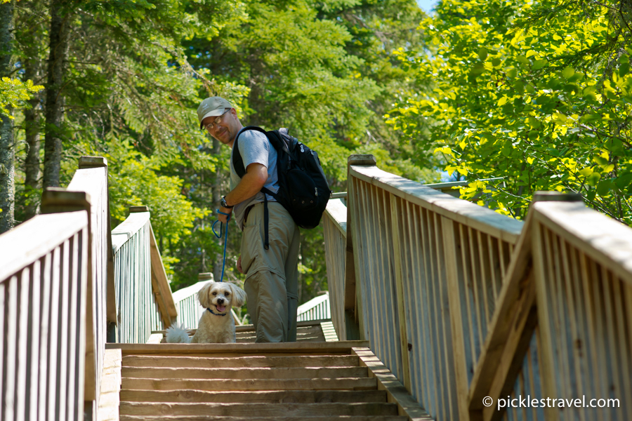 Top 5 Dog-Friendly Minnesota State Parks- Judge C.R. Magney State Park