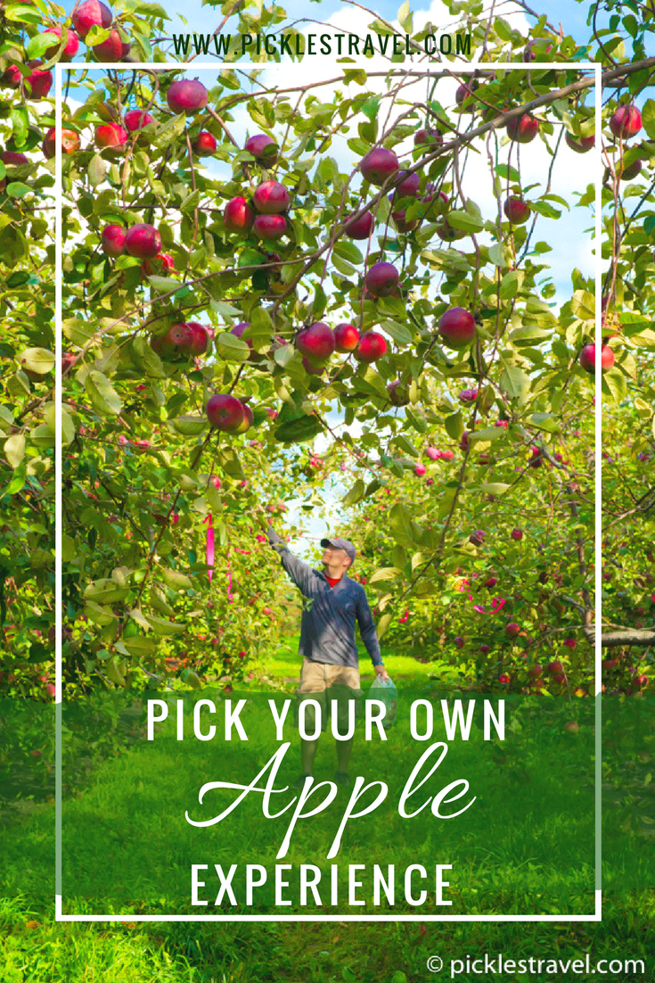 Picking your own apples from an apple farm is the perfect bucket list item and worth taking a weekend road trip to do. There are always more things to do for the kids plus the joy of being outside and getting apples as fresh as you possibly can. There are several places across Minnesota where you can get your favorite apples from honeycrisp to Mcintosh to Cortland and more.