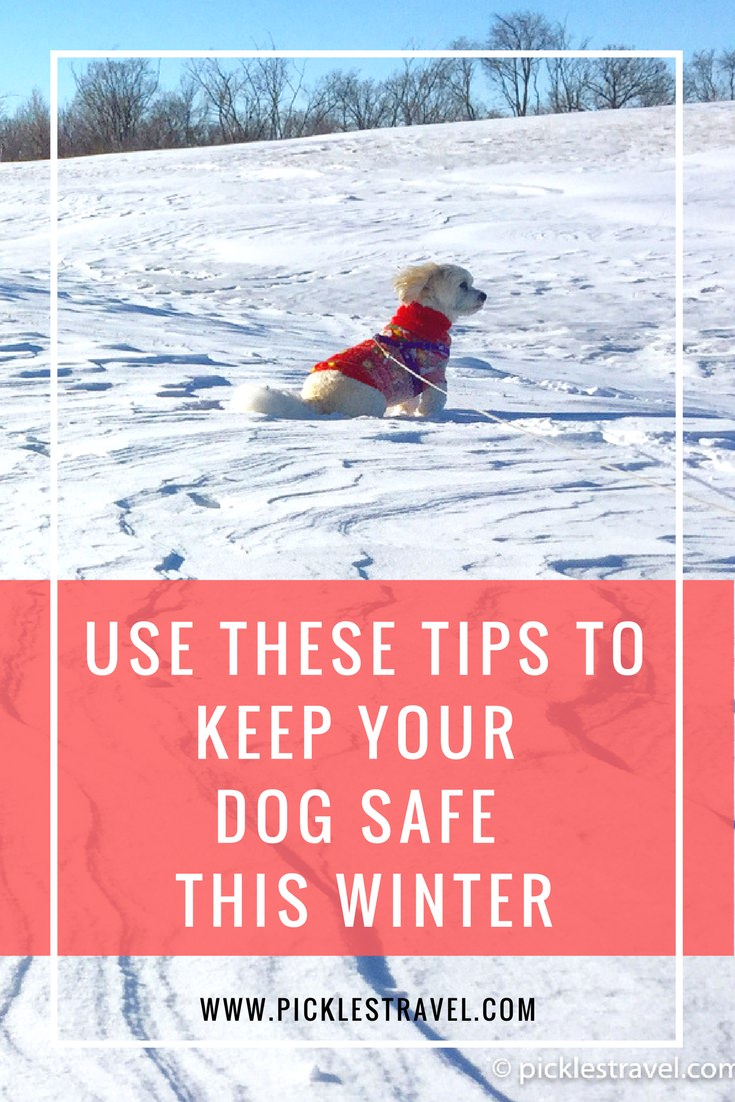 Dog Safety tips, coats, clothes, and Ideas for the winter that helps keep them warm in cute outfits and making sure they're safe in the winter and cold weather season- whether you're traveling for the holidays or just out for a walk