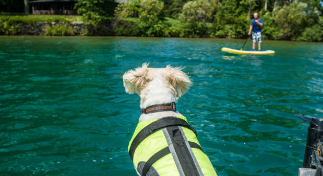 Importance of a doggie life jacket for dog water safety