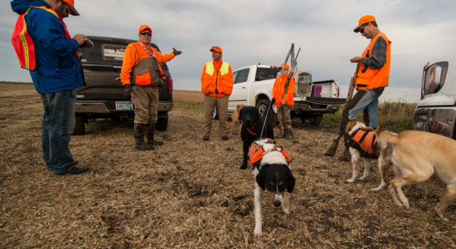 Minnesota Governor's Pheasant Opener training